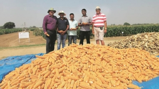 IARI scientists with a freshly harvested crop of the world's first quality protein and pro-vitamin A-rich hybrid maize